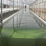 biorizon biotech tanque microalgas