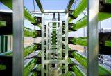 algaenergy detalle Fotobiorreactor