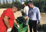 CARM La producción de lima en la Región crece más de un 25 por ciento en los dos últimos años