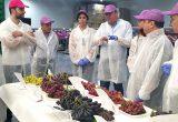 Vietnam visita uvasdoce