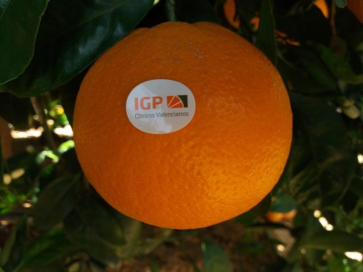 naranja igp citricos valencianos