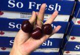 CFP Canadian cherries