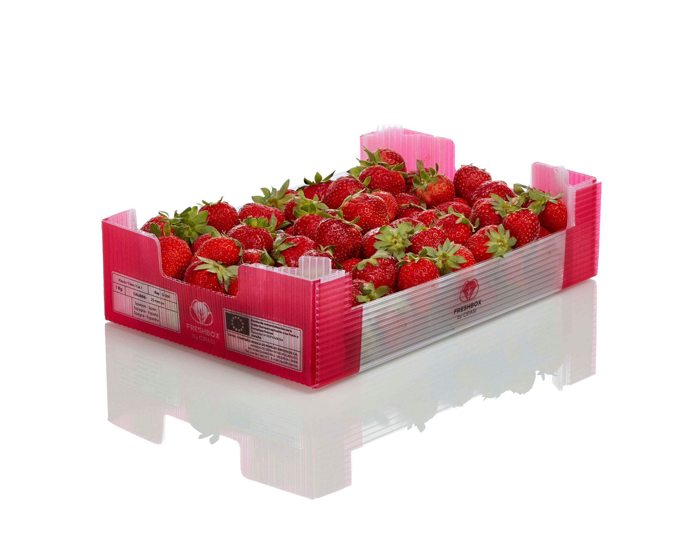 cipasi freshbox caja