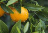 naranja compo