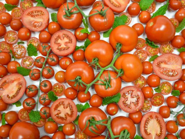 variedades-tomate-unica
