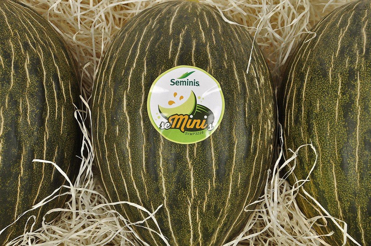 seminis melon piel sapo