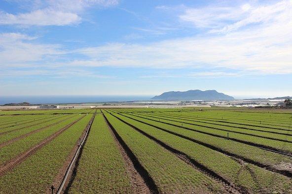 MARINA DE COPE cultivo campo aire libre