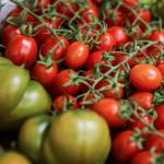 ORGANIC ROUTE fruit log tomates