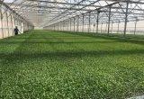cristalplant_nuevas instalaciones semillero invernadero