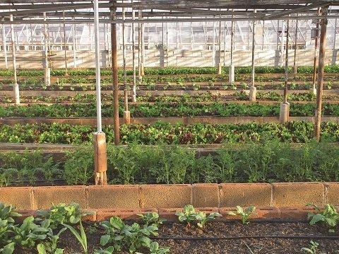 INTERIOR invernadero cultivo