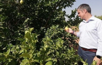 Del Amor durante su visita a la finca donde se está estudiando la viabilidad de un nuevo limón Verna