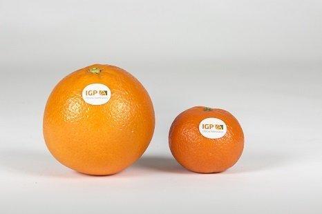 Naranja y Clementina IGP citricos valencianos