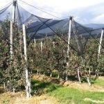 Arrigoni Fructus manzana agrotextil