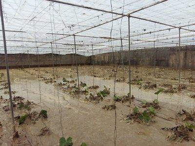 inundaciones cultivos almeria foto coag