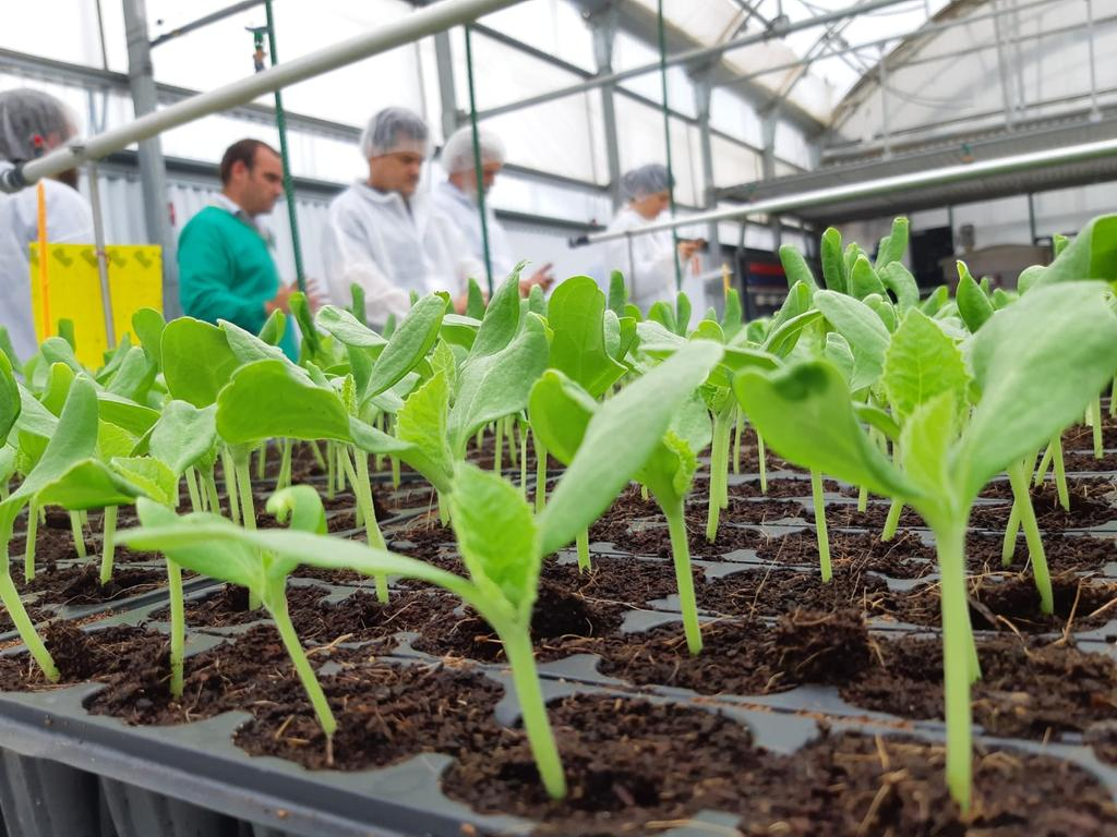 semillero fito