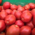 ecoculture Tomate tratado con Blush