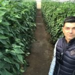 Keops agro