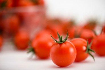 Syngenta tomate
