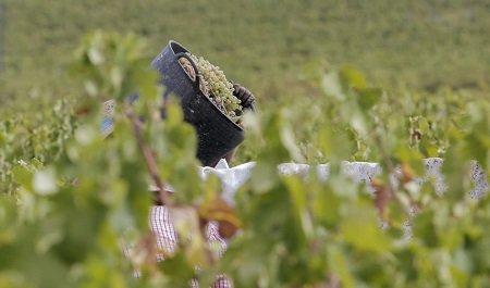 Agricultura Temporeros uva campo agricultor