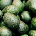 Avocado aguacate foto citrosol