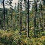 Central forestal smurfit kappa