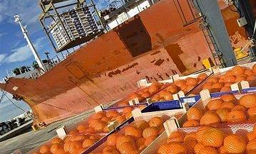 Importación naranjas foto unió llauradors