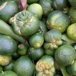 citricos desperdicio alimentario