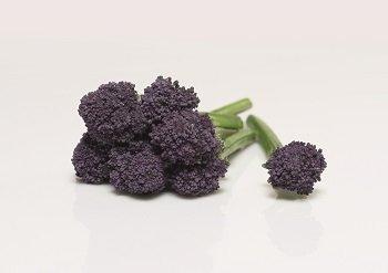 redi bejo_purple_sprouting_059