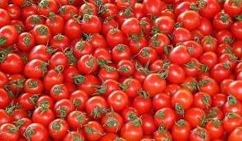 tomate-marroqui