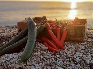 KEOPS AGRO - NO USAR pepino-pimiento-tomate-playa-Almería