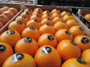 exportación de cítricos hispalco
