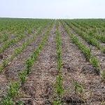 pac eco esquemas cultivo aire libre