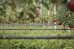 VOG campo manzanas