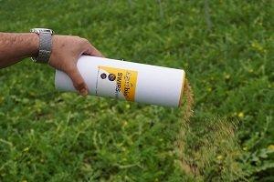 Agrobío Suelta de SWIRScontrol en sandia para una raìpida proteccion del cultivo
