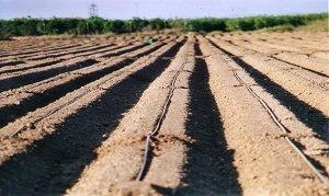 GOTERO campo agricultura riego