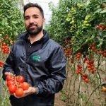 semillas fitó Alejandro Sánchez tomate ateneo