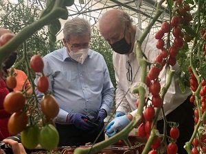 pedro caparrós y vicente del bosque lobello tomate cherry