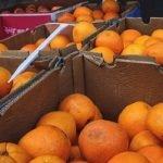 UNIO LLAURADORS cajas_de_naranjas importadas