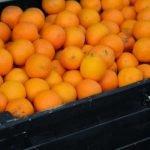 citricos recurso web