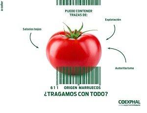 coexphal tragamos origen marruecos tomate