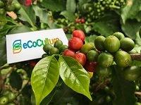 Cultivo de café con Ecoculture