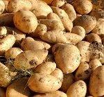 patata neiker udapa