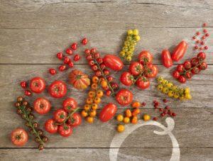 BelOrta tomatoes