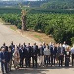 citricos valencianos Primer Corte Naranja Valenciana 2021