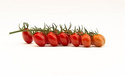 top seeds tomate fanello